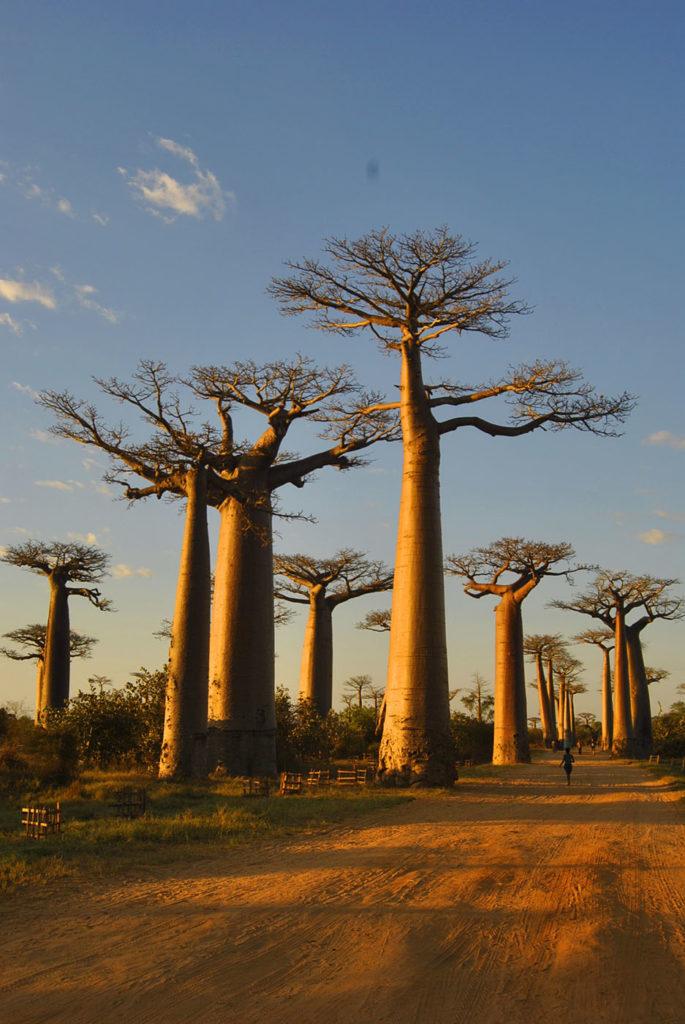 Da-non-perdere-Namatour-viaggi-solidali-in-Madagascar-1